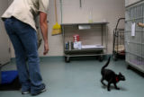 (PG3342)  Animal Care Supervisor Lisa Clifton (cq) checks on the 37 new cats at the Denver Dumb...