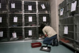 (PG3458)  Animal Care Supervisor Lisa Clifton (cq) checks on the 37 new cats at the Denver Dumb...