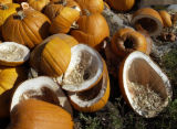 [Denver, CO]--Devin Milerowski, 8, adds a rotted pumpkin to a pile of vandalized pumpkins at...