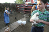 Nathan Johnson, 11 right, and his sister, Bethany, 9, play with the chickens during feeding time...