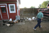 Nathan Johnson, 11, walks by the chickens, turkeys, and ducks during feeding time.  Lisa and Dale...