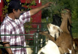 (Denver, Colo.  Sept 20, 2004) Armando Pena, a farmer from Hudson, Colo., is spending this week...