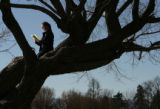 MJM110   Enjoying a day off from work, Jennifer Gilbert (cq), 26, reads The Namesake in a tree...