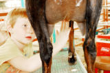 Anna Butler, 6, of Carpenter, Wyo., rubs Udder Balm on one of the family goats at the Boulder...
