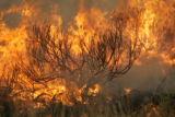 Firefighters battle a blaze as a grass fire said to be started by lightning spreads over Green...