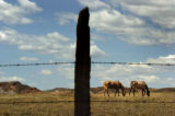 2004/4/26 Livermore, Colo.,-Horses graze on private land on County Road 80 north of Highway 287...