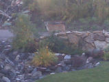 3 mountain lions are shown in the back yard area of the home of Jan and Bruce Shugart near...