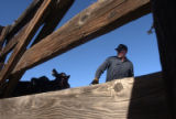 (Denver, CO., January 6, 2004) Ron Busse, of Edson, KS., moves cattle at the stock yards in...