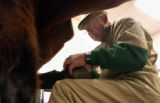 (LITTLETON, Colo., Dec. 23, 2004) Dr. Marvin Beemanworks on Dan Lincoln's  horse Stoker at his...