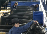 01/10/2005 THE NATIONAL WESTERN STOCK SHOW- John Andras of Big Timber, MT grooms cattle belonging...