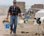 Ray Hardesty (cq) works on his  dairy farm in Eaton Monday April 28,2008. Ray Hardesty  and his...
