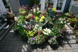 (4/26/2005, Denver, CO.)  On April 26th, Rob Proctor's (cq) patio garden was exploding with...