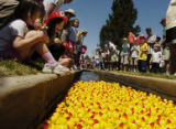 Some of the 1,000 rubber ducks head down Goldsmith Gulch Sunday afternoon May 15, 2005, in G.W....