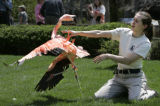 Zookeeper Jessica Meehan tangos at the Denver Zoo with a flamingo she carried from its winter...
