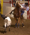 (Denver, Colo., 1/19/05- David Motes slides off of his horse while competing in the team roping...