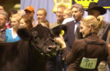 (DENVER, Colo., January 20, 2005) Flush, black cow left, stands patiently with Amanda Schnoor,...