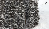 "(LOVELAND, Colo., November 29, 2004) ""Cat's Meow"", black diamond mogul run saw few..."
