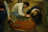 (Colorado Springs, Colo., 12/2/ 2004)  Iraqi veterinarian Farah Murrani (c) is at the Cheyenne...