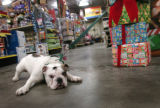 (12/14/04,Denver, CO)  Shoppers are expected to spend big on their pets this holiday season. ...