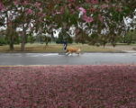Melissa Bloomquist  (cq) and her dog Jasmine take a jog in the rain in City Park Monday morning...