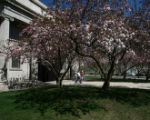 The trees in Civic Center Park are in full bloom Wednesday afternoon April 12, 2006 in Denver....