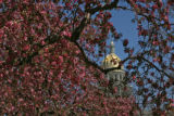 The blosooming trees in Civic Center Park frame the Capital's dome Wednesday afternoon April 12,...