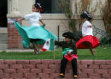Jose Bencomo (cq) (accent over e in Jose), 5, center, holds a Mexican flag while his sisters...