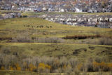 (DENVER, Co. - SHOT 4/5/2005) Homes, one after another, encroach upon open space near Green...