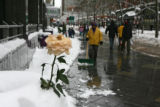 Somebody put a fresh rose in the snow on the 16th Street Mall  Thursday afternoon December 21,...