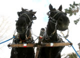 Horses Bob and Bill, left to right, wait for a customer outsie the Redstone Inn, Thursday December...