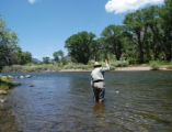 Ed Dentry photo  A fly fisher hooks a brown trout at Coller State Wildlife Area on the Rio Grande....