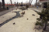 (ALAMOSA shot on 3/31/05)      The Campus is not large but it is tree laden and many student and...