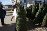 Jose Hernandez, cq, of Lafayette helps carry a free christmas tree from the Sister Carmen...