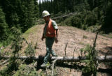 U.S.  Forest Service employee Tom Hudson (cq) walks over a tree  laying across road FS 369 in the...