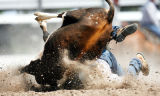 WYCHE101 - Brian Snell, of Cheyenne, Wyo., tumbles beneath his steer during the the Frontier Days...