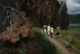Members of the Stegeman family, Manhattan Kansas, go for a hike on a path with pine Beetle kill,...