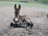 A baby mule, who is yet to be named, was born in Colbran, CO, to a mule named Kate, owned by Larry...