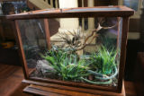 "A terrarium holding fake snakes:  props from the play, ""You Can't Take it With You.""  at..."