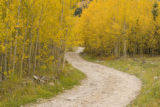 Autumn aspens along Forest Road 121, which eventually turns into Pearl Pass, near Ashcroft, Colo.,...