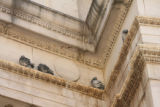 A big problem at the Civic Center Park Theatre is pigeon droppings. Denver wants to issue $93.4...