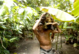 A Honduran man in Ayapa, a small village in the state Yoro,  works hauling loads of freshly cut...