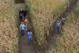 Sometimes paths cross at the 8th annual Corn Maze at the Denver Botanic Garden at Chatfield, ...