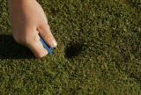 DM0106  Kaiya Jenkins, 8, of Highlands Ranch fixes a ball mark on a green while attending a golf...