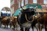 Seth A. McConnell/Journal staff: An oxen fights against its yoke as it pulls a wagon up Main St in...