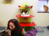 (CS0342) Staff member Joey Armstrong plays with Baby, a cat at the Dumb Friends League in Denver,...