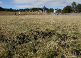 A group called, Evergreen Ultimate Fresbee, play near elk droppings, on Buchanan Field, Evergreen...