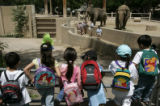 Kids watch Asian elephants Dolly, left, and Mimi, right, at the Denver Zoo in Denver, Colo., on...