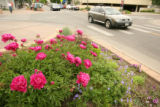 Flower beds in front of businesses at the corners of the streets in Cherry Creek North on June 6,...