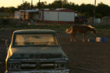 MJM1259  A horse eats near a mobile home and an old truck Friday 06/13/08 at the Rodey Colonia...