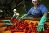 MJM301  Bibiana Hernandez (cq), right, and others inspect chile peppers on a conveyor belt Friday...